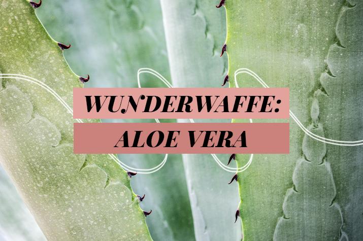 Header-Aloe Vera